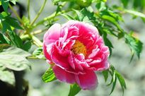 Tất tần tật ý nghĩa phong thủy các loài hoa