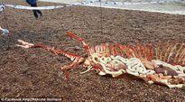Phát hiện hài cốt còn nguyên nội tạng của quái vật hồ Loch Ness?
