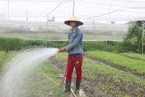 Cử nhân kĩ thuật máy tính trồng rau kiếm 20 triệu một tháng