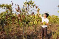 Đắk Nông: Dân chờ tiền hỗ trợ, tỉnh đưa trả trung ương