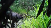 Đặt bẫy ảnh, ghi hình đàn bò tót tại Đắk Lắk
