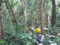 Trần tình của doanh nghiệp trước lệnh đóng cửa rừng