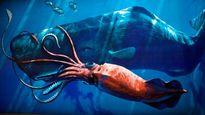 Huyết chiến kinh hoàng giữa mực khổng lồ và cá nhà táng