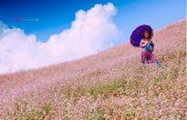 Ngắm hoa tam giác mạch và trải nghiệm văn hóa Mông