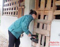 Hướng thoát nghèo của người phụ nữ Thái ở Môn Sơn