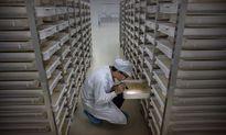 Bên trong nhà máy nuôi muỗi lớn nhất thế giới