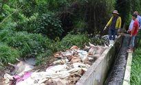 Một công ty Đài Loan vứt hàng trăm heo chết ra sông Sài Gòn