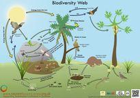 [Nghiên cứu] 58% vùng đất trên địa cầu bị giảm sự đa dạng sinh học xuống dưới mức an toàn