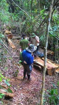 Phó Thủ tướng chỉ đạo xử lý nghiêm vụ phá rừng ở Lâm Đồng