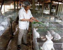 Xã Ngọc Mỹ (huyện Lập Thạch – tỉnh Vĩnh phúc) tập trung hoàn thiện các tiêu chí xây dựng nông thôn mới