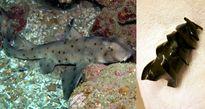 10 sự thật thú vị về động vật khiến bạn ngạc nhiên