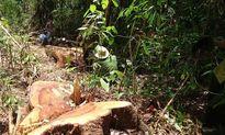 Lâm Đồng: Dừng các dự án khai thác lâm sản trong rừng tự nhiên