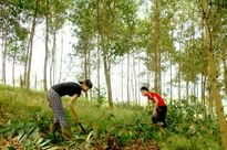 Làm gì để dân sống - chết với rừng?