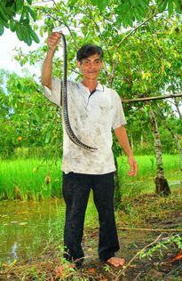 Giai thoại 'Thầy rắn' đệ nhất Cà Mau (kỳ 1)