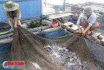 Tín hiệu vui từ nghề nuôi cá nước ngọt ở Lộc Hà