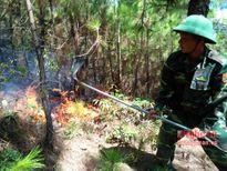 Nghệ An: 5ha rừng thông ở Quỳnh Lưu bị thiêu rụi