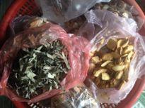 Chẹo Thị Lai – Truyền nhân Mế Mụi với bài thuốc chữa vô sinh hiếm muộn