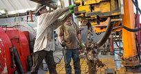 Giá dầu giảm 1% trước mối lo thừa cung tại Mỹ