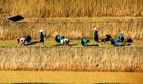 Tuyệt tác ruộng bậc thang Hoàng Su Phì mùa nước đổ