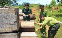 Kon Tum kiểm tra toàn diện công tác quản lý bảo vệ rừng