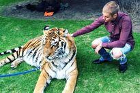 Justin Bieber bị 'sờ gáy' vì nuôi giữ hổ trái phép