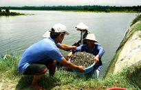 Sử dụng kháng sinh trong thủy sản: Doanh nghiệp thiệt 1, nông dân mất 10