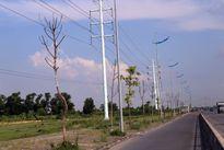 Hà Nội: Cây xanh trên đường nghìn tỷ hóa củi khô