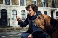 'Sherlock' mùa thứ 4 tung teaser đầy căng thẳng và tuyệt vọng