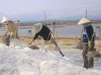 Triển khai mua tạm trữ, giá muối bắt đầu nhúc nhích