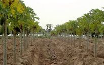 DN thâu tóm đất xây dựng sân golf: Chủ tịch quận Long Biên bị khởi kiện