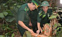 Tướng quân đội lên tiếng vụ phá rừng pơmu tại Quảng Nam