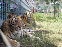 Mờ ám kinh doanh động vật hoang dã