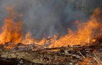 2 anh em ruột chết cháy lúc đốt rẫy