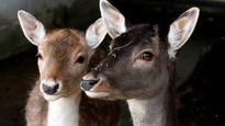 New Zealand sẽ giết toàn bộ động vật ăn thịt