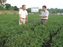 Chè Thái Nguyên cam kết đảm bảo vệ sinh an toàn