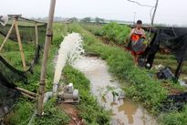 Hà Nội: 45ha lúa bị ngập trắng tại huyện Ba Vì