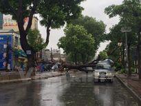Bão số 1: Hà Nội 1 người chết, 5 người bị thương; Thái Bình đổ gần 9.000 cây