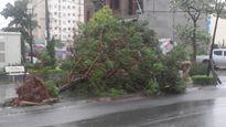 Hà Nội: Dính bão, mưa to, cây cối đổ ngổn ngang, giao thông hỗn loạn