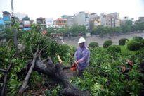Ảnh hưởng của bão số 1: Hà Nội khẩn trương thu dọn sau mưa bão