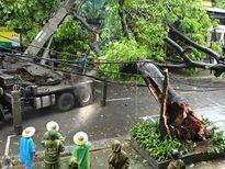 Trận Quảng Ninh - Hải Phòng phải hoãn do hậu quả cơn bão số 1