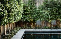 10 loài cây giúp sân vườn nhà xanh mát quanh năm