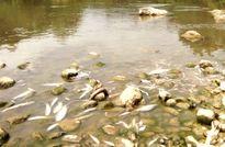 Sau cá tôm, hàng trăm con vịt lăn ra chết trên sông Âm