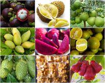 Cả trăm loại nông sản thực phẩm an toàn Nam Bộ 'trình làng' ở Thủ đô