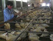 Tổ chức lại sản xuất, dịch vụ có hiệu quả ở nông thôn