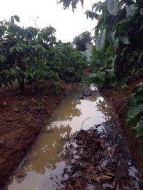 Ô nhiễm môi trường từ các hộ chăn nuôi