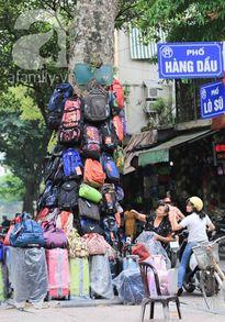 1001 công dụng của các gốc cây ở phố cổ Hà Nội