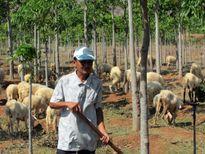 Lão nông người Nùng chinh phục vùng đất bazan