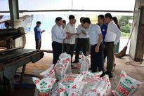 Phân NPK-S Lâm Thao phù hợp từng giai đoạn cây trồng
