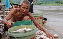 Lộ nguyên nhân khiến gần 125 tấn cá bị chết ở Thanh Hóa