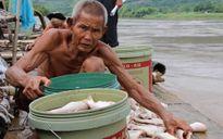 Gần 125 tấn cá bị chết trong đợt mưa lũ ở Thanh Hóa